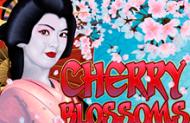 Азартные онлайн игры на деньги на игровом автомате Cherry Blossoms